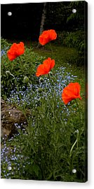 Poppy Foursome Acrylic Print by Renate Nadi Wesley