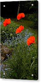 Poppy Foursome Acrylic Print
