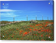 Poppy Hill- Art By Linda Woods Acrylic Print by Linda Woods
