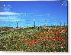 Poppy Hill- Art By Linda Woods Acrylic Print by Linda Woods