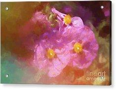 Poppy Impressions Acrylic Print by Elaine Teague