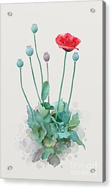 Acrylic Print featuring the painting Poppy by Ivana Westin