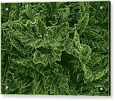 Poppy Leaves Acrylic Print