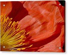 Poppy Love Acrylic Print by S Lynn Lehman