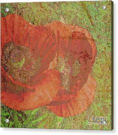 Acrylic Print featuring the photograph Poppy Love by Traci Cottingham