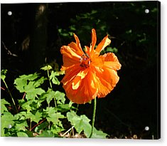 Poppy Love Acrylic Print