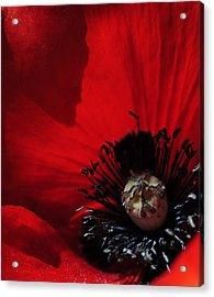 Poppy No. 2 Acrylic Print