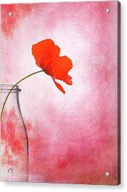 Poppy Red Acrylic Print by Mark Rogan