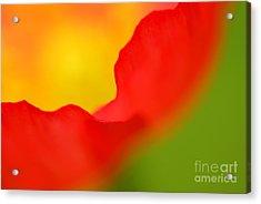 Poppy Acrylic Print by Silke Magino