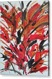 Poppy Storm Acrylic Print