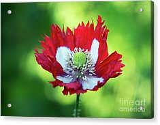 Acrylic Print featuring the photograph Poppy Victoria Cross by Tim Gainey