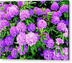 Pops Of Purple Acrylic Print