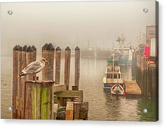 Portland Harbor Morning Acrylic Print