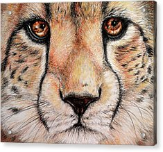 Portrait Of A Cheetah Acrylic Print by Heidi Kriel