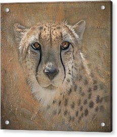 Portrait Of A Cheetah Acrylic Print