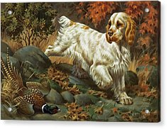 Portrait Of A Clumber Spaniel Hunting Acrylic Print by Walter A. Weber