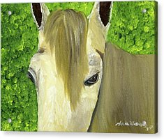 Portrait Of A Curious Horse Acrylic Print by Maria Williams