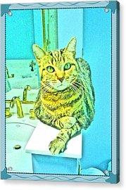 Portrait Of A Feline Acrylic Print