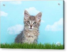 Portrait Of A Fluffy Gray Kitten Acrylic Print