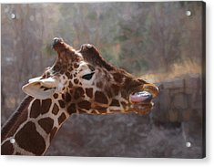 Portrait Of A Giraffe Acrylic Print by Ernie Echols