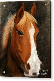 Portrait Of A Horse Acrylic Print by Jasna Dragun