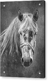 Acrylic Print featuring the photograph Portrait Of A Horse by Tom Mc Nemar