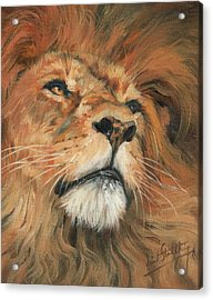 Acrylic Print featuring the painting Portrait Of A Lion by David Stribbling