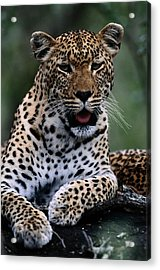 Portrait Of A Male Ten-month-old Acrylic Print by Chris Johns