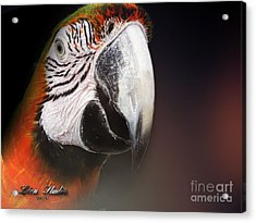 Portrait Of A Parrot Acrylic Print by Melissa Messick