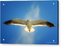 Portrait Of A Seagull Acrylic Print