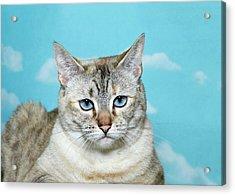 Portrait Of A Skeptical Lynx Cat Acrylic Print