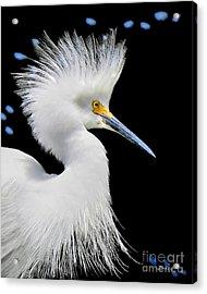 Portrait Of A Snowy White Egret Acrylic Print by Jennie Breeze