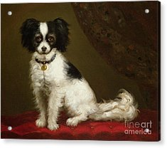 Portrait Of A Spaniel Acrylic Print by Anonymous