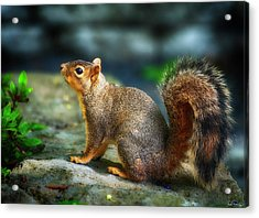 Portrait Of A Squirrell Acrylic Print