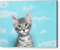 Portrait Of A Tiny Tabby Kitten Acrylic Print