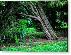 Acrylic Print featuring the photograph Portrait Of A Tree by Madeline Ellis