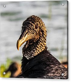 Portrait Of A Vulture Acrylic Print