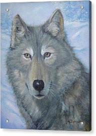 Portrait Of A Wolf Acrylic Print