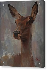 Portrait Of A Young Doe Acrylic Print