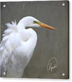 Portrait Of An Egret Signed Acrylic Print
