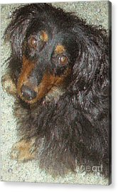 Portrait Of Annie Acrylic Print by Don Phillips