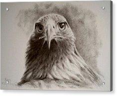 Portrait Of Eagle Acrylic Print by Anna Franceova