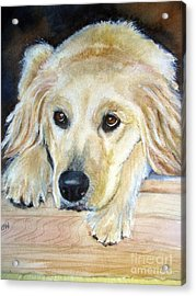 Portrait Of Golden Retriever Acrylic Print by Patricia Pushaw