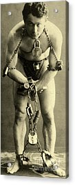Portrait Of Harry Houdini In Chains, 1900 Acrylic Print