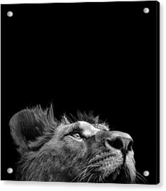 Portrait Of Lion In Black And White IIi Acrylic Print