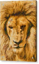 Acrylic Print featuring the photograph Portrait Of Lion by Scott Carruthers