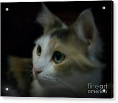 Portrait Of Miss Kitty Acrylic Print by Emily Kelley