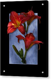 Portrait Of Red Lily Flowers Acrylic Print