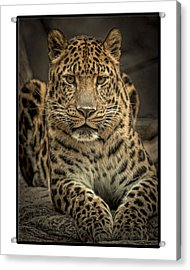 Acrylic Print featuring the photograph Poser by Cheri McEachin