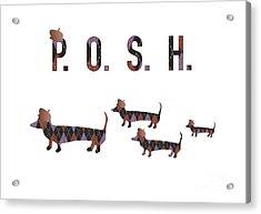 Posh Dachshunds Acrylic Print